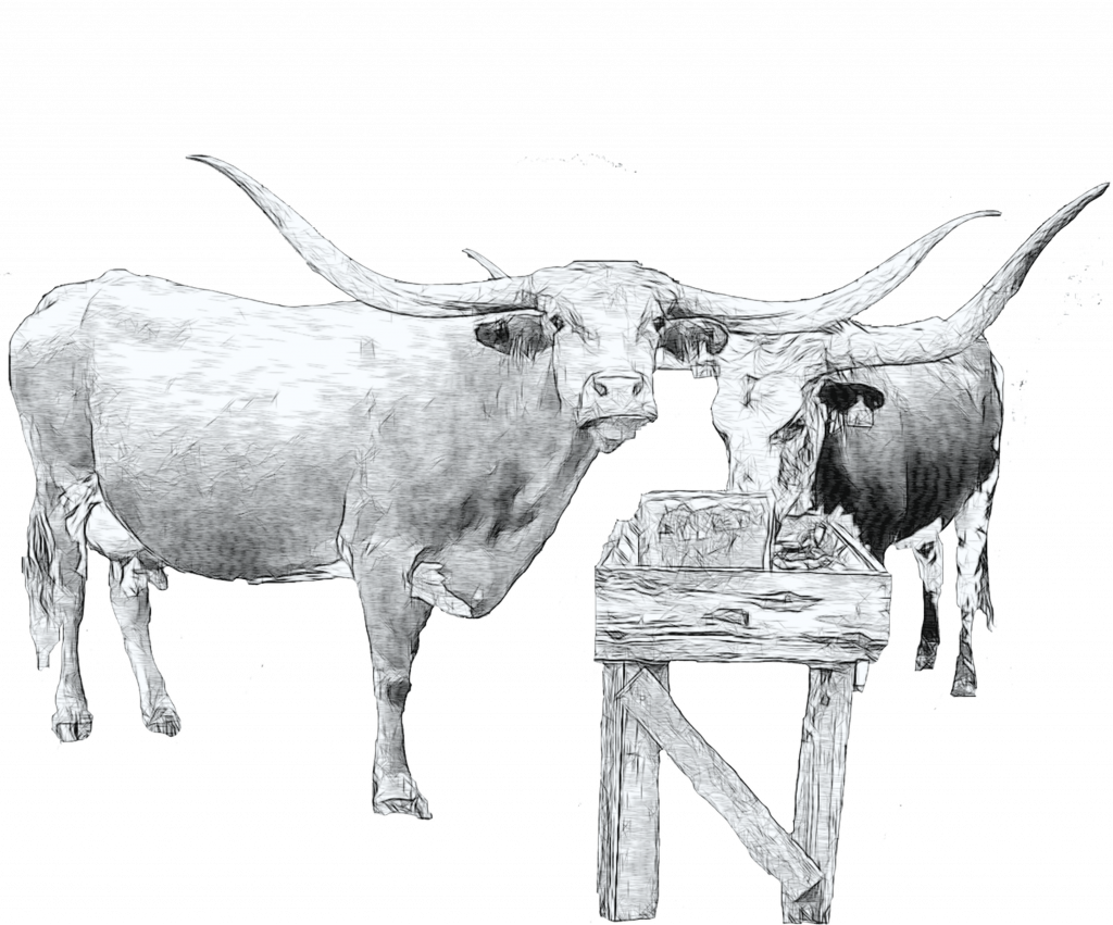 longhorn cattle art
