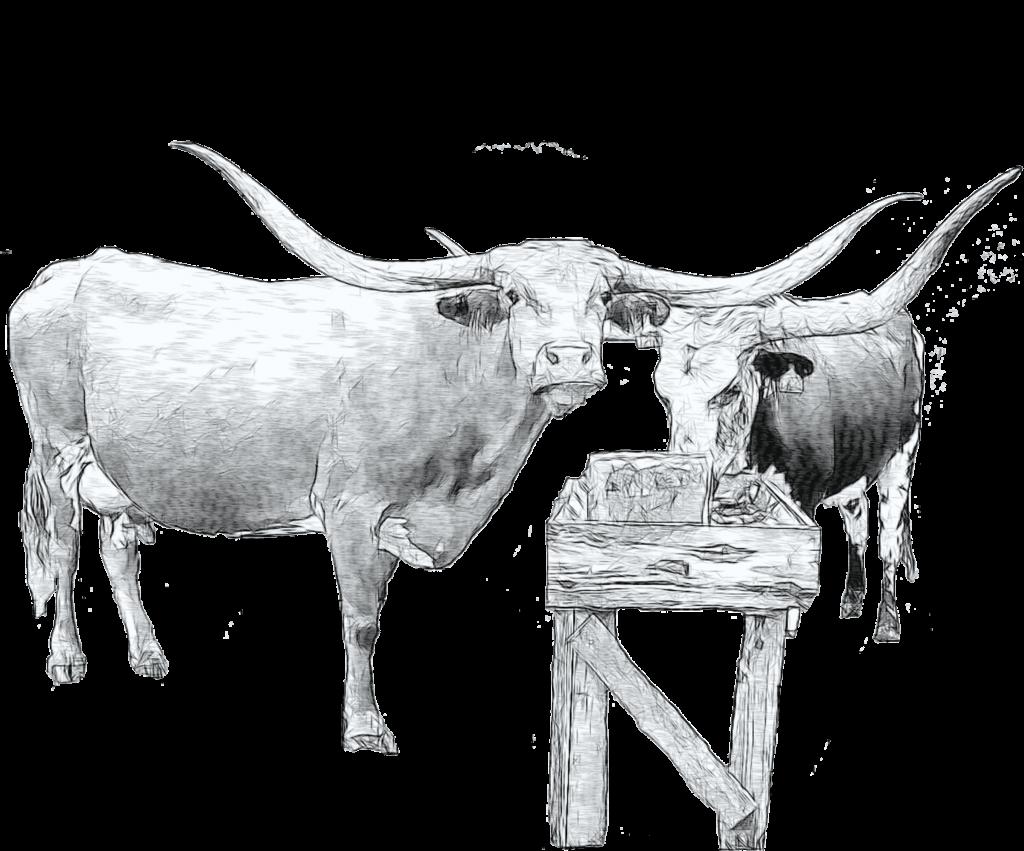 longhorn cattle art