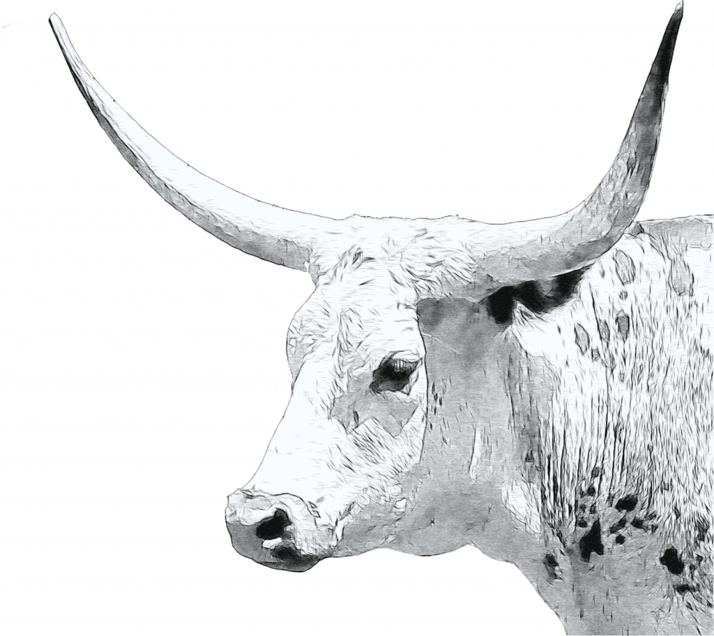 longhorn cow sketch