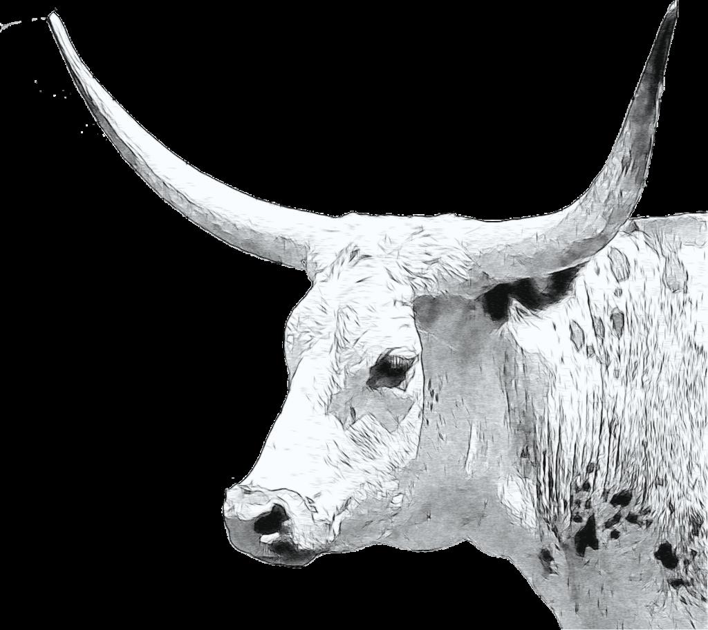 longhorn cow sketch